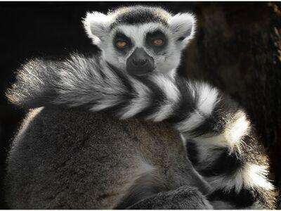 Wildlife Encounters: Wonders of the Rainforest